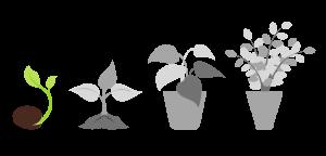seeds 1 1