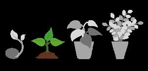 seeds 2 1