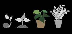 seeds 3 1